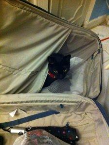 Midnight the cat in my luggage