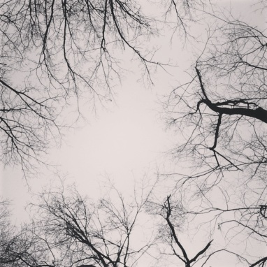 Social Hashtag Series #AboveMe Instagram Photos: Winter NYC Trees