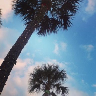 Social Hashtag Series #AboveMe Instagram Photos: Florida Palm Trees